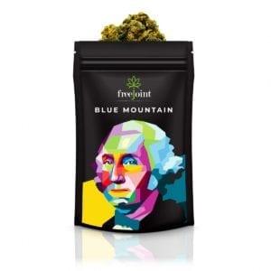 Cannabis Light Blue Mountain